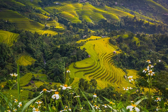 Hillside for trekking in Vietnam