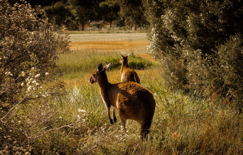 Best places to see Australian desert flora and fauna